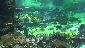 Rencontre Boulogne Sur Mer : aquarium nausicaa boulogne sur mer youtube ~ Maxctalentgroup.com Avis de Voitures