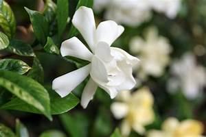 Most, Fragrant, Houseplants