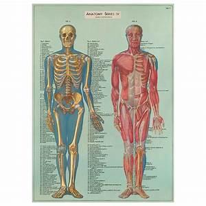 Human Anatomy Scientific Vintage Style Poster Ephemera