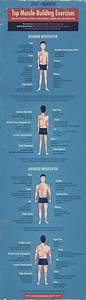 Best Muscle Building Exercises For Your Each Bodypart