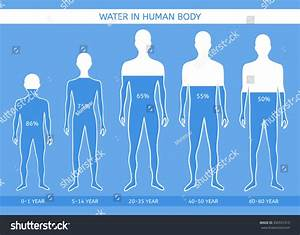 Percentage Of Water In Human Body Chart Water Human Body Man Different Ages Stock Vector 350557313