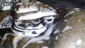 1999 Saab 9-3 Fuel Tank Leak - P0442