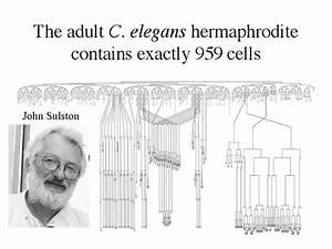 Developmental Biology 3235