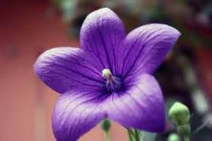 Welche Blumen Kann Man Essen : schneckenresistente blumen pflanzen eine umfassende ~ Watch28wear.com Haus und Dekorationen