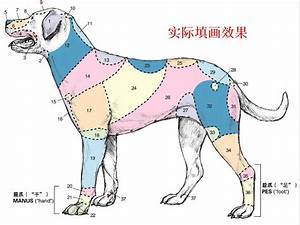 Usd 31 12   Gifted Color Pen  Dog Anatomy Filled Map