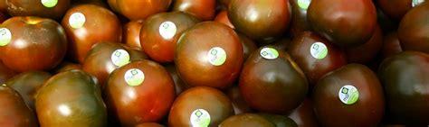 Tumšo tomātu audzēšana   Mārupes Siltumnīcas