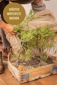 Balkonpflanzen Winterfest Machen : balkon kr uter berwintern garten fr ulein gr ner ~ Watch28wear.com Haus und Dekorationen
