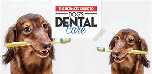 Dog Dental Care  The Ultimate Guide On How To Do It Right