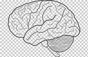25 Brain Diagram Black And White