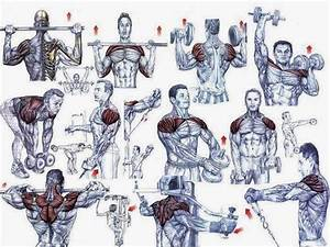 This A Simple Exercises For The Begining U0026 39 S Bodybuilding   Chest Program Shoulders Program Should