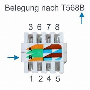Lan Kabel Belegung : l tek rj45 stecker werkzeuglos ~ A.2002-acura-tl-radio.info Haus und Dekorationen
