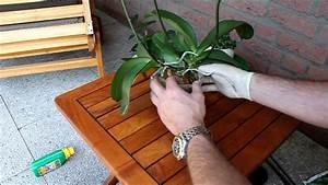 Orchideen Umtopfen Video : orchideen umtopfen und pflegen phalaenopsis newwonder555 ~ Watch28wear.com Haus und Dekorationen