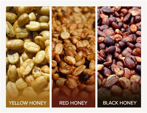 The basic difference between natural, honey, and washed coffees is how much of the cherry is left on the bean before drying. What's with the Honey? A Guide to Coffee Processing - Di ...